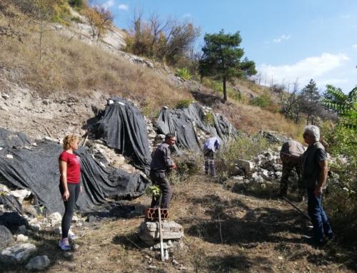 Početak realizacije arheoloških projekata u Muzeju Ponišavlja